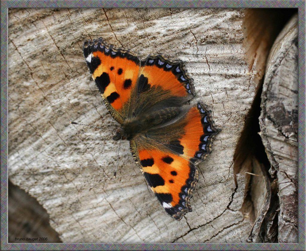 Petite Tortue posée sur buche de bois ailes écartées