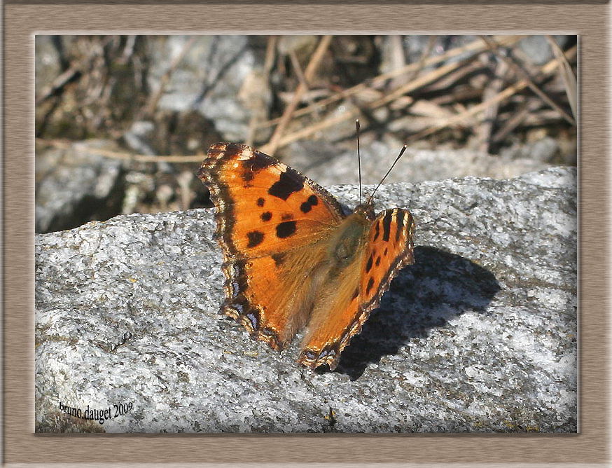 Grande Tortue posée sur rocher ailes écartées en direction du soleil
