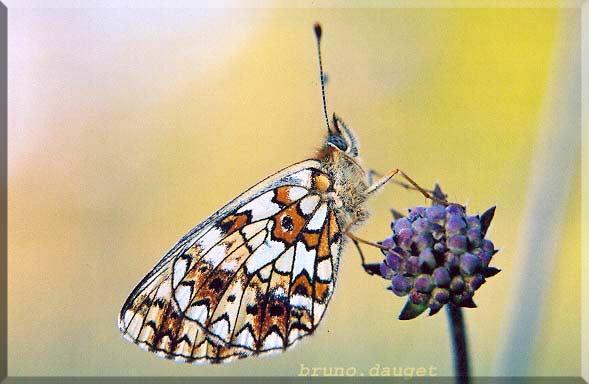 Petit Collier argenté posé sur bouton floral ailes repliées