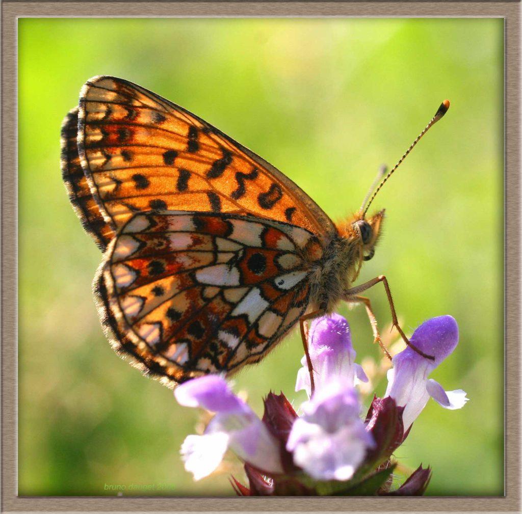 Petit Collier argenté posé ailes repliées sur fleur mauve